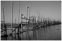 Birds perched on fence. Inle Lake, Myanmar ( black and white)