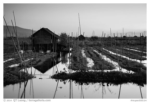Floating gardens at sunset, Maing Thauk Village. Inle Lake, Myanmar (black and white)