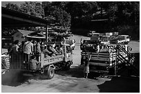 Trucks carrying pilgrims to the top. Kyaiktiyo, Myanmar ( black and white)