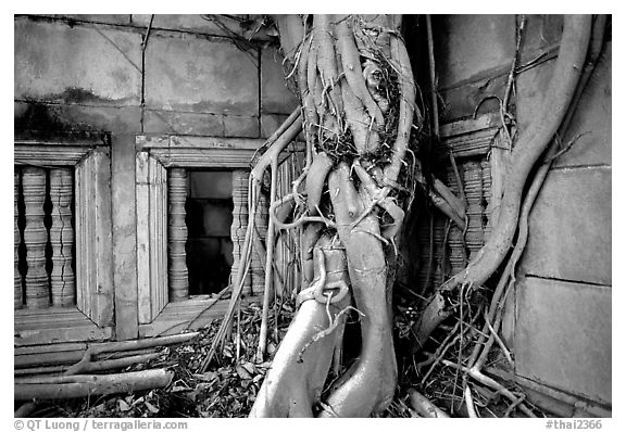 Roots of giant tree and khmer-style temple. Muang Boran, Thailand (black and white)