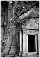 Vegetation invades khmer-style temple. Muang Boran, Thailand (black and white)