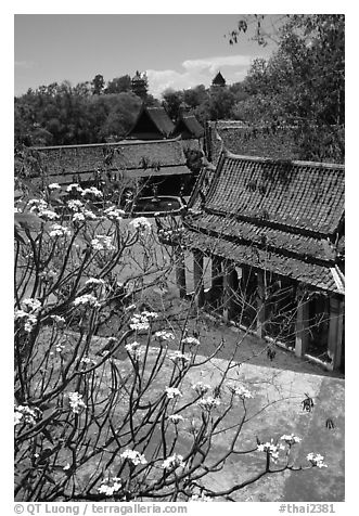 Blooming tree and rooftops. Muang Boran, Thailand (black and white)
