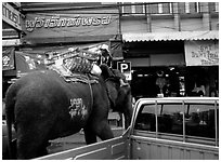 Elephant Parking. Lopburi, Thailand (black and white)