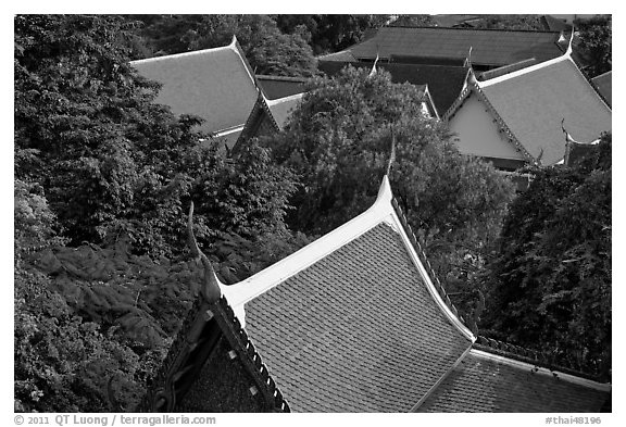 Thai-style temple rooftops emerging from trees. Bangkok, Thailand (black and white)