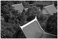 Thai-style temple rooftops emerging from trees. Bangkok, Thailand ( black and white)