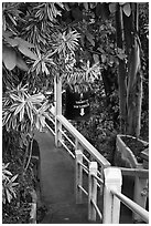 Path, Golden Mount. Bangkok, Thailand (black and white)