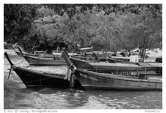 Long tail boats and trees, Ao Rai Leh East. Krabi Province, Thailand (black and white)