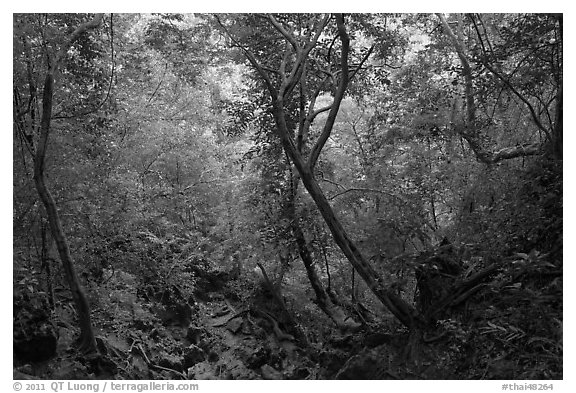 Jungle path, Rai Leh. Krabi Province, Thailand (black and white)