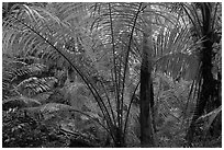 Tropical jungle, Laem Phra Nang, Rai Leh. Krabi Province, Thailand ( black and white)