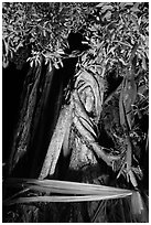 Banyan tree with ribbon by night, Ko Phi-Phi Don. Krabi Province, Thailand (black and white)