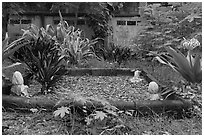 Grave in muslim cemetery, Ko Phi-Phi Don. Krabi Province, Thailand ( black and white)