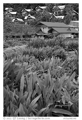 Tropical flowers and hillside houses, Ko Phi Phi. Krabi Province, Thailand (black and white)