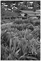 Tropical flowers and hillside houses, Ko Phi Phi. Krabi Province, Thailand ( black and white)