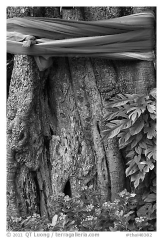 Detail of sacred banyan tree with ribbons, Ko Phi-Phi island. Krabi Province, Thailand (black and white)
