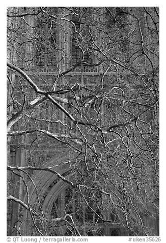 Bare branches and palace of Westminster facade. London, England, United Kingdom (black and white)