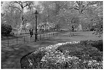 Businessman walking in  Saint James Park amongst flowers. London, England, United Kingdom (black and white)