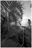 Visitor looking down from the balcony walkway of the Palm House. Kew Royal Botanical Gardens,  London, England, United Kingdom (black and white)
