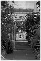 Inside the Temperate House. Kew Royal Botanical Gardens,  London, England, United Kingdom (black and white)