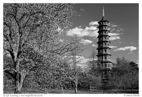 black single men in kew gardens Kew is london's largest unesco world heritage site offering unique landscapes and iconic architecture from every stage of the gardens' history our collection of living plants is the largest.