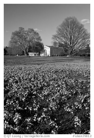 Carpet of glories of the Snow (Chionodoxa) and Orangerie. Kew Royal Botanical Gardens,  London, England, United Kingdom (black and white)