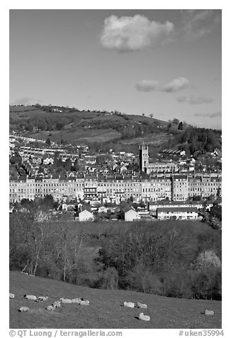 Sheep and distant view of town. Bath, Somerset, England, United Kingdom (black and white)