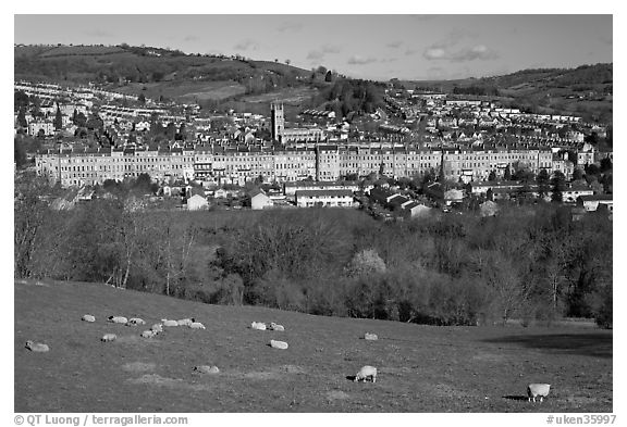 Sheep on hill, with town below. Bath, Somerset, England, United Kingdom (black and white)