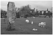 Standing stone, sheep, and village, Avebury, Wiltshire. England, United Kingdom (black and white)