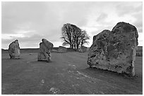 Megaliths and tree, Avebury, Wiltshire. England, United Kingdom (black and white)