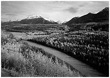 Autumn Aspens, Matanuska River, and Chugach mountains. Alaska, USA (black and white)