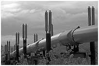 Trans-Alaska Pipeline near Richardson Highway. Alaska, USA (black and white)