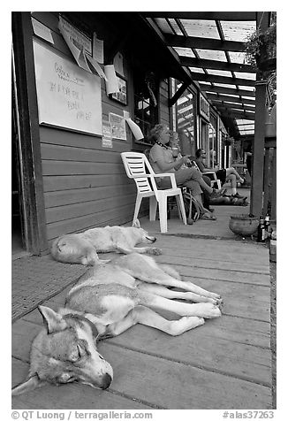 Dogs laying on porch of lodge. McCarthy, Alaska, USA (black and white)