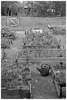 Community vegetable garden. McCarthy, Alaska, USA ( black and white)