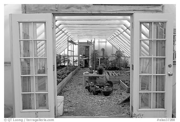 Greenhouse used for vegetable growing. McCarthy, Alaska, USA (black and white)