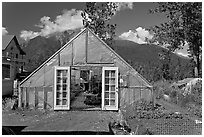 Greenhouse and vegetable garden. McCarthy, Alaska, USA (black and white)