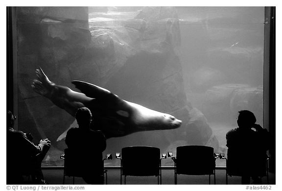 Visitors sitting next to the northern sea lion aquarium, Alaska Sealife center. Seward, Alaska, USA