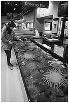 Tourist checks tidepool exhibit, Alaska Sealife center. Seward, Alaska, USA (black and white)