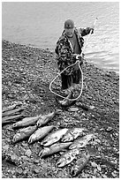 Fisherman laying out on shore salmon. Homer, Alaska, USA ( black and white)