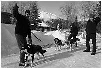 Residents preparing dog sled. Wiseman, Alaska, USA (black and white)