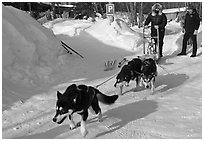 Dog mushing from parking lot. Wiseman, Alaska, USA ( black and white)