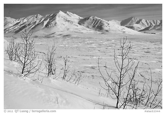 Shrubs and Arctic Mountains in winter. Alaska, USA (black and white)