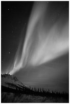 Northern Lights and starry night sky, Brooks Range. Alaska, USA ( black and white)