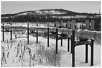 Trans Alaska Pipeline in winter. Alaska, USA ( black and white)