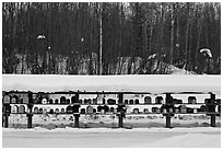 Mailboxes. Alaska, USA (black and white)