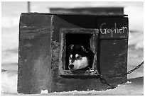 Husky dog peeking out of doghouse. North Pole, Alaska, USA (black and white)