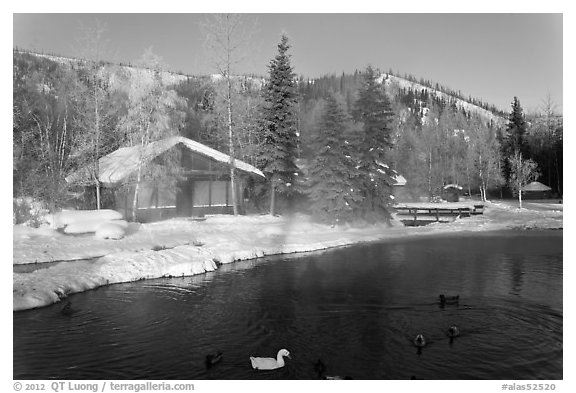 Cabins with swans and ducks in winter. Chena Hot Springs, Alaska, USA (black and white)