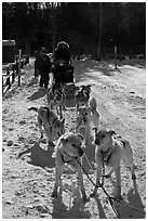 Huskies dogs and sled. Chena Hot Springs, Alaska, USA (black and white)