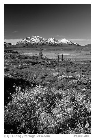 Tundra in fall colors and snow covered peaks. Alaska, USA (black and white)