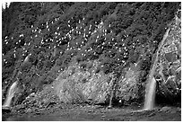 Waterfalls and Seabirds. Prince William Sound, Alaska, USA (black and white)