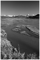 Wide Susitna River and fall colors on the tundra. Alaska, USA ( black and white)