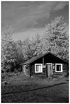 Log cabin and trees in fall color. Alaska, USA (black and white)